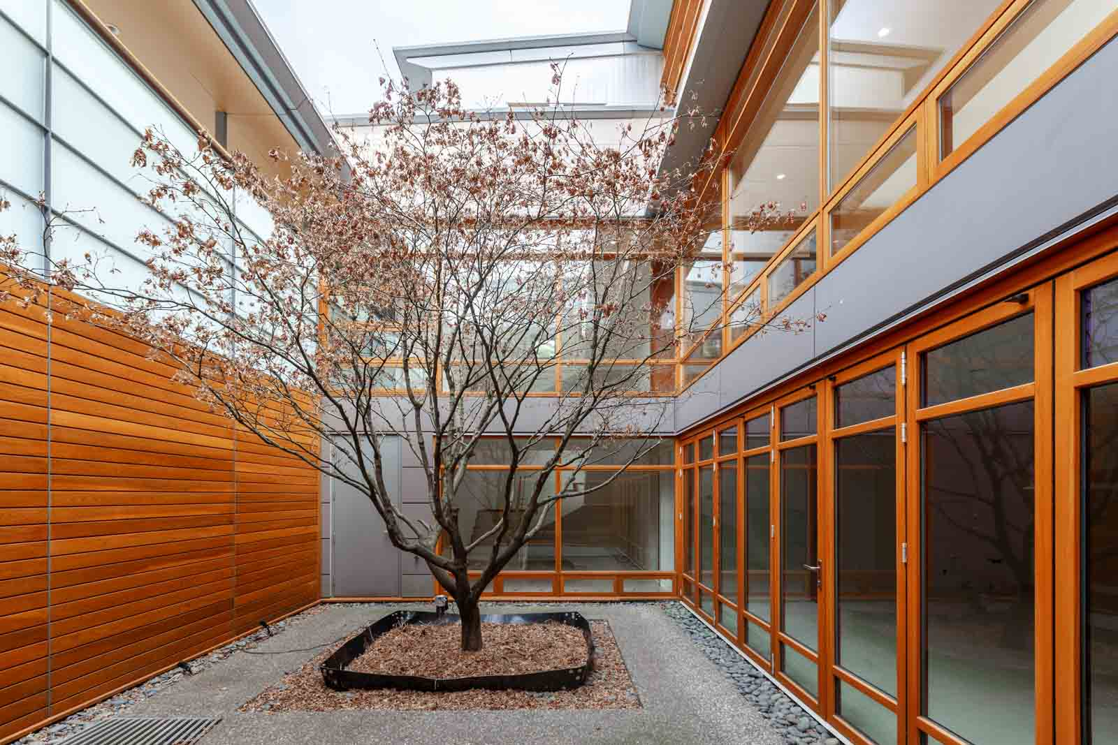 Interior courtyard with tree inside West Vancouver luxury rental home.